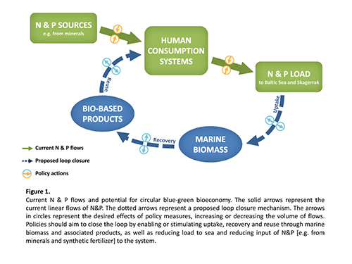 Exploring the circular potential of the marine bioeconomy in Sweden