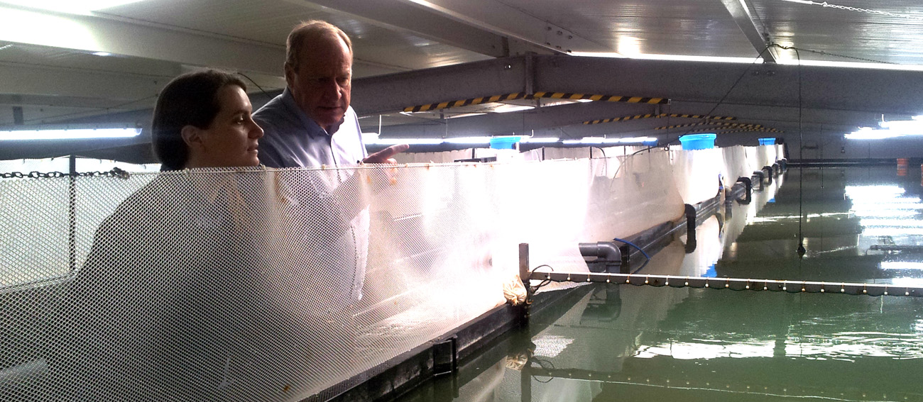 Know-how exchange:  German shrimp farm in cooperation with University of Gdansk