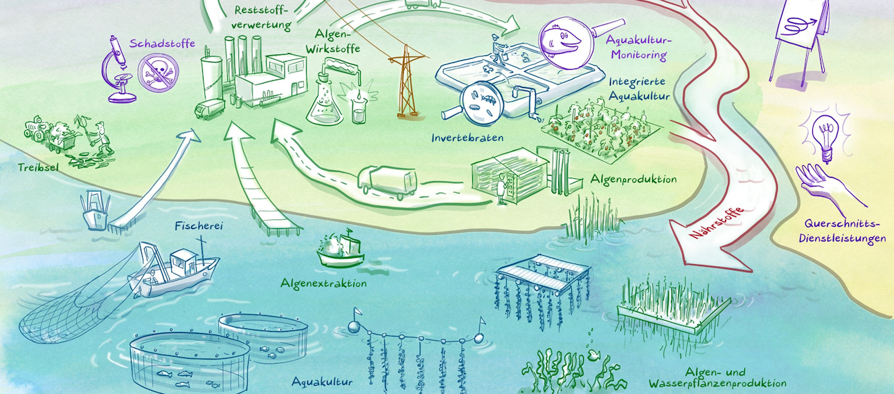 20 million Euro for Blue Bioeconomy in Northern Germany