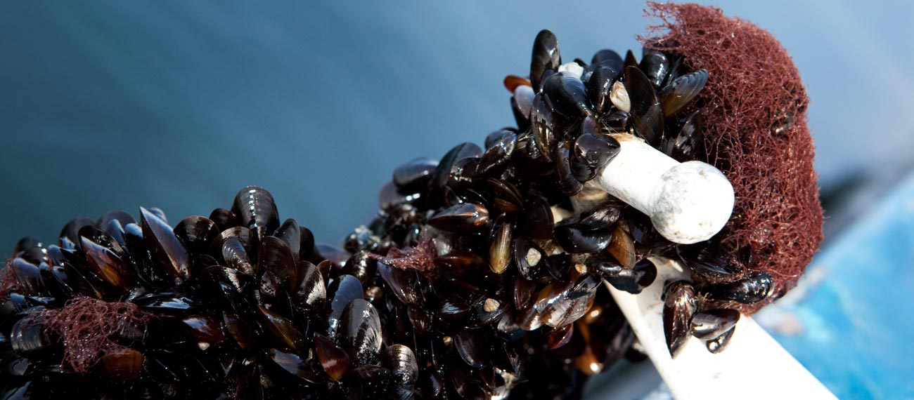 German Stakeholder Meeting: mussel farming & water quality in the Baltic Sea'